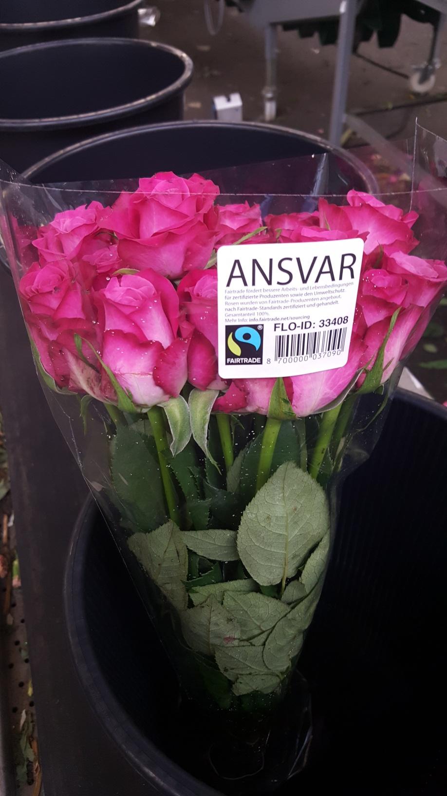 Roses x 20