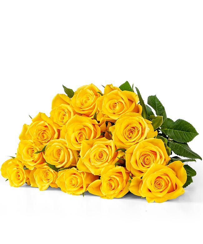 15 Rosen gelb 40cm