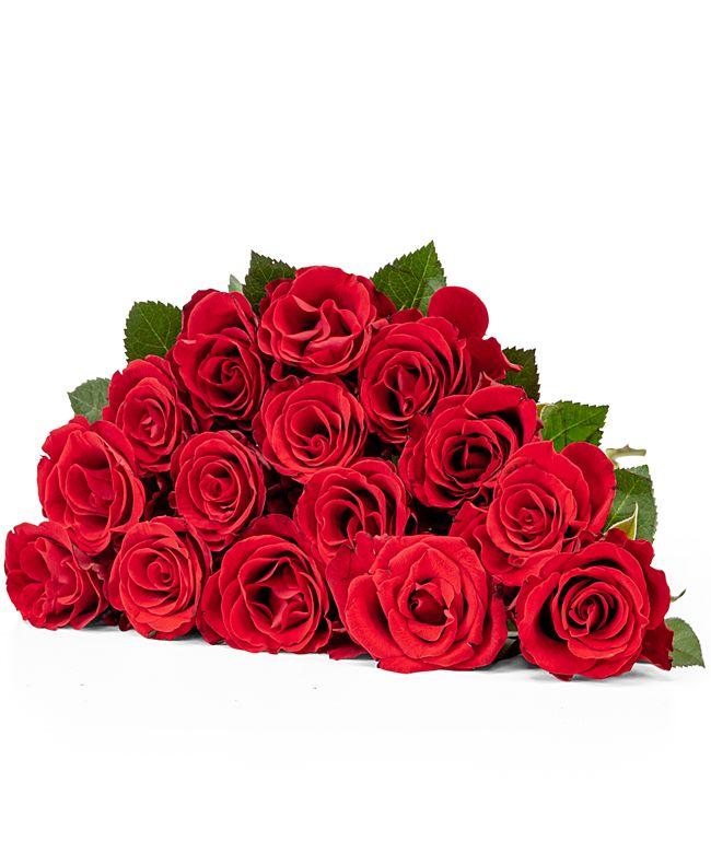 15 Rosen rot 40cm
