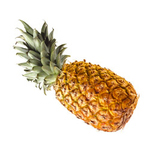 Baby Ananas Queen Victoria
