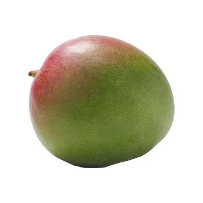 Mango XXL